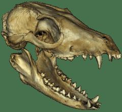 skull-image_0